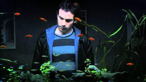 la vida de los peces